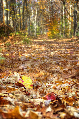 Autumn Photograph - Autumn Trail by Donna Doherty
