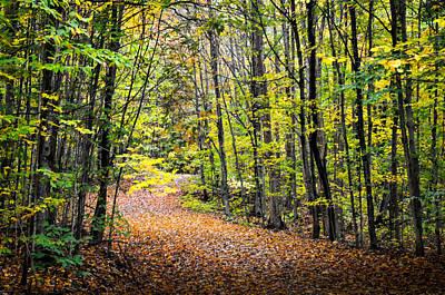 Photograph - Autumn Trail by Douglas Pike