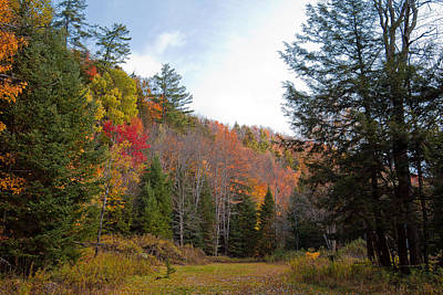Photograph - Autumn Trail In Eagle Bay New York by David Patterson