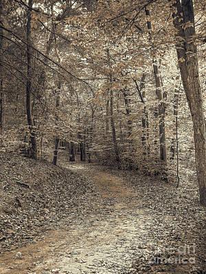 Photograph - Autumn Trail by Jeff Breiman