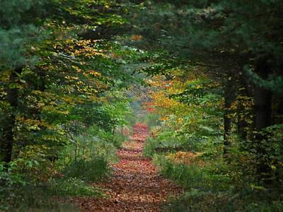 Photograph - Autumn Trail by MTBobbins Photography