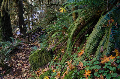 Photograph - Autumn Trails by Margaret Pitcher