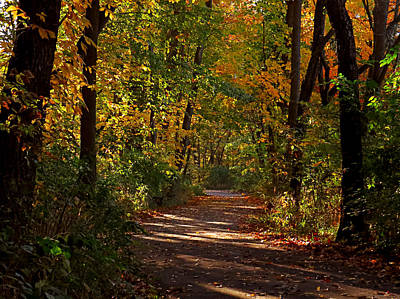 Photograph - Autumn Trails by Ron Grafe