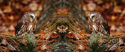 Autumn Treasure- Saw Whet In Forest Art Print by Inspired Nature Photography Fine Art Photography