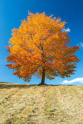 Photograph - Autumn Tree - 1 by Jatinkumar Thakkar