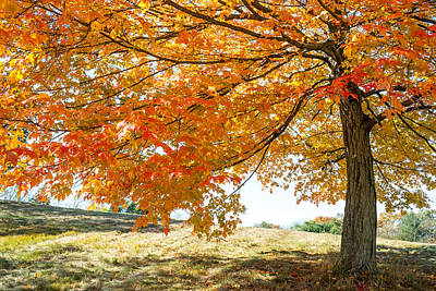 Photograph - Autumn Tree - 2 by Jatinkumar Thakkar