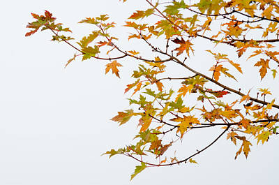 Photograph - Autumn Tree Branch by Rob Huntley