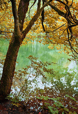 Park Scene Digital Art - Autumn Tree Colors by Modern Art Prints
