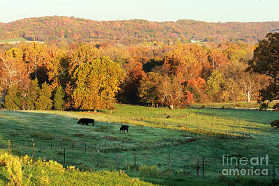 Farmland In Autumn Art Print by Adam Long