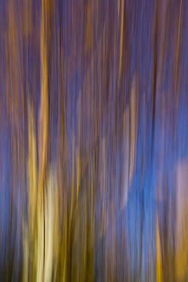 Photograph - Autumn Tree by David Pyatt