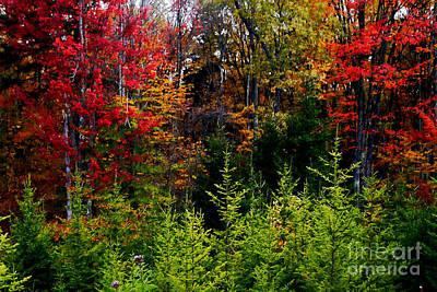 Autumn Tree Foliage Print by Lanjee Chee