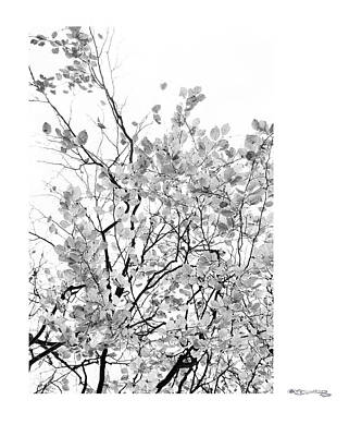Autumn Tree In Black And White 2 Art Print by Xoanxo Cespon
