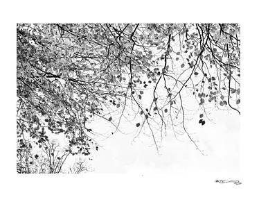 Autumn Tree In Black And White 3 Art Print by Xoanxo Cespon