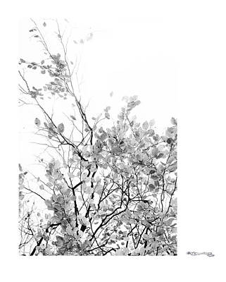 Autumn Tree In Black And White  Art Print by Xoanxo Cespon