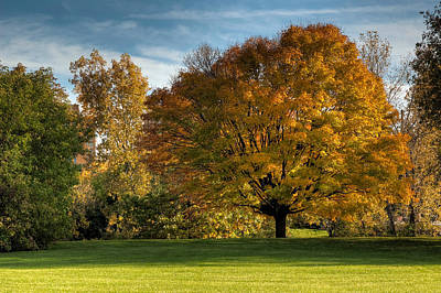 Photograph - Autumn Tree On Victoria Island by Rob Huntley