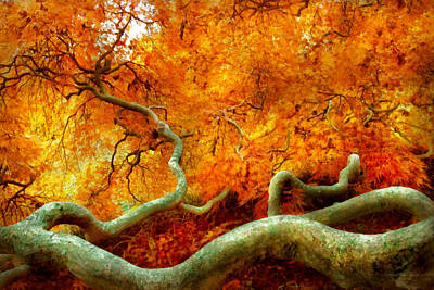Photograph - Autumn - Tree - Serpentine by Mike Savad