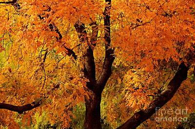 Photograph - Autumn Tree by Steven Liveoak