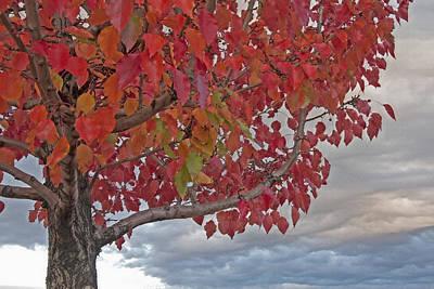 Leafy Mixed Media - Autumn Tree Study 2 by Steve Ohlsen