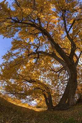 Photograph - Autumn Tree by Vishwanath Bhat
