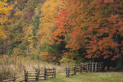 Photograph - Autumn Trees And Fence  by Jo Ann Tomaselli