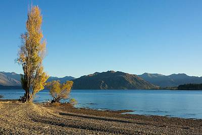Autumn Trees At Lake Wanaka Art Print by Stuart Litoff