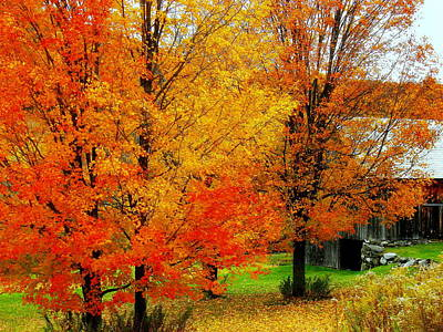 Art Print featuring the photograph Autumn Trees By Barn by Rodney Lee Williams
