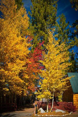 Photograph - Autumn Trees by Celso Diniz