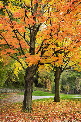 Park Scene Photograph - Autumn Trees by Christina Rollo