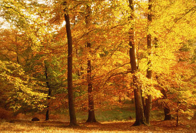 Autumn Trees Cumbria England Art Print by Panoramic Images