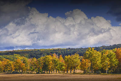 Photograph - Autumn Trees In A Row by Randall Nyhof
