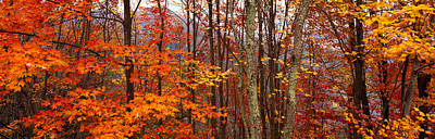 Autumn Scenes Photograph - Autumn Trees In Great Smoky Mountains by Panoramic Images