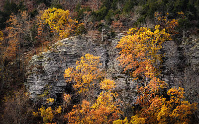 Autumn Trees Art Print by James Barber