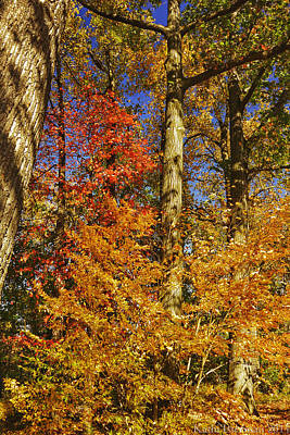 Photograph - Autumn Trees by Kathi Isserman