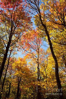 Autumn Trees Original
