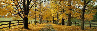 Pasture Woodland Photograph - Autumn Trees Near Waynesboro Virginia by Panoramic Images