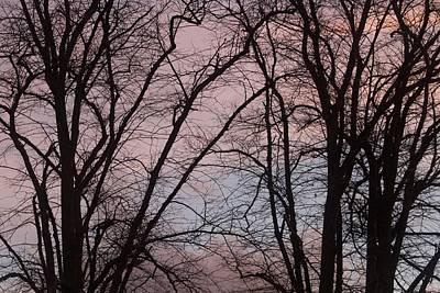Autumn Trees Art Print by Paul Muscat