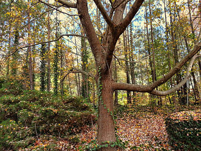 Photograph - Autumn Trees by Paulette B Wright