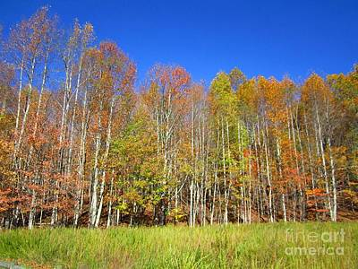 Photograph - Autumn Trees Reaching For Blue by Cynthia  Clark