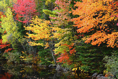 Orange Photograph - Autumn Trees, Sheepscot River, Palermo by Michel Hersen