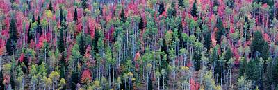 Photograph - Autumn Treescape by David Andersen