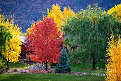 Photograph - Autumn Trio by Johanne Peale