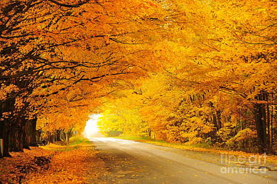 Autumn Tunnel Of Gold 8 Art Print by Terri Gostola