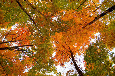 Photograph - Autumn Upshot by Bill Pevlor