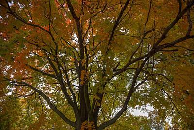 Photograph - Autumn Veins by Ryan Heffron