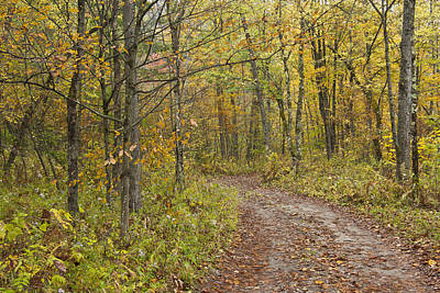 Vermont Photograph - Autumn-vermont-back Country Road-trees by Andy Gimino