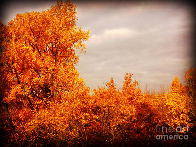 Photograph - Autumn View From My Window by Miriam Danar