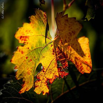 Autumn Vine Art Print by Alexander Fedin