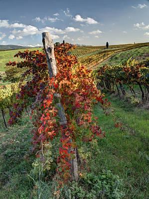 Autumn Vines Art Print by Eggers Photography