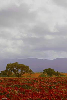 Autumn Vineyard Santa Ynez California Print by Barbara Snyder