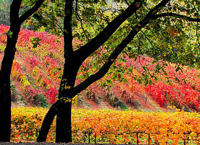 Placerville Photograph - Gold Country Autumn Vineyard  by Leslie Wells